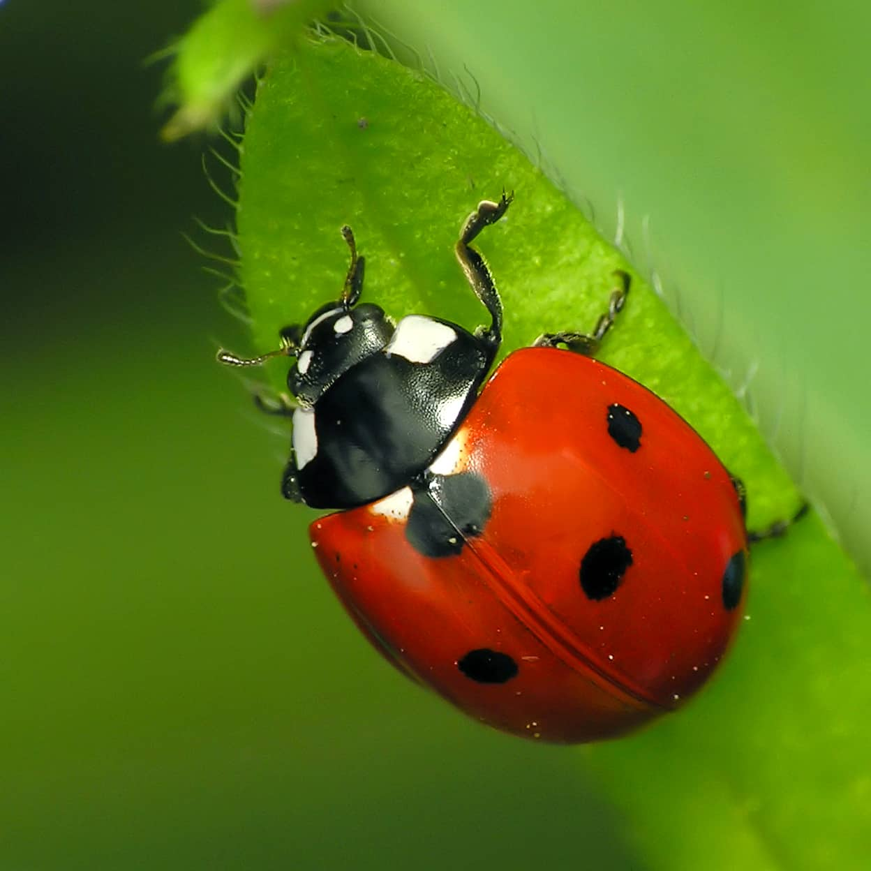 All about beetles | Welcome Wildlife