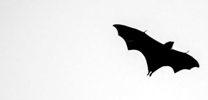 Silhouette of black bat flying against white background.