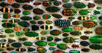 Museum display of dozens of beetles of various shapes, sizes and colors, placed side by side on white background.