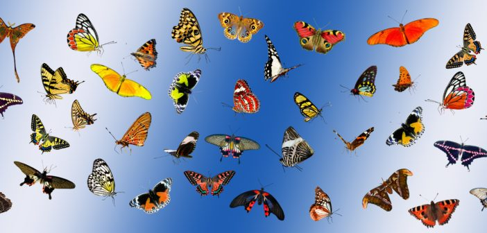 Collage of numerous colorful butterflies against a blue background.