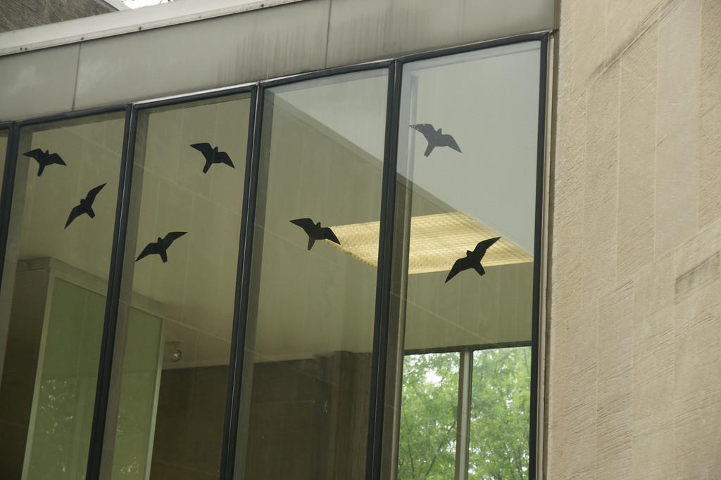 Seven decals of black-colored birds in silhouette stuck on a series of tall windows.