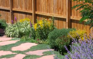 A bed of perennial plants in front of a wood fence, with a flagstone pathway bordering the front.