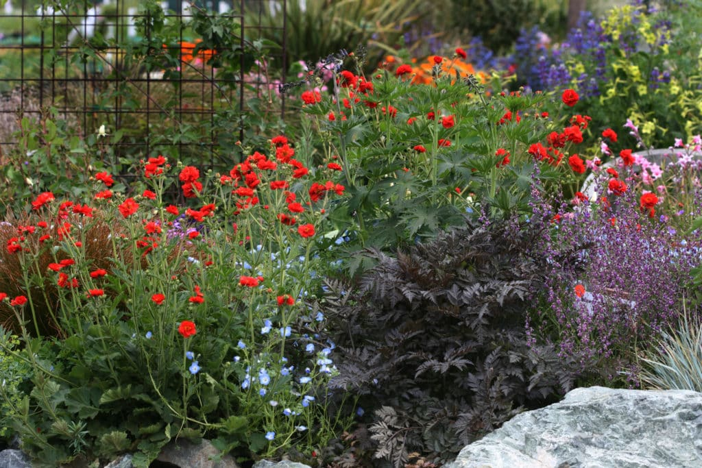 Colorful flower garden with closely planted plants in a backyard wildlife habitat..