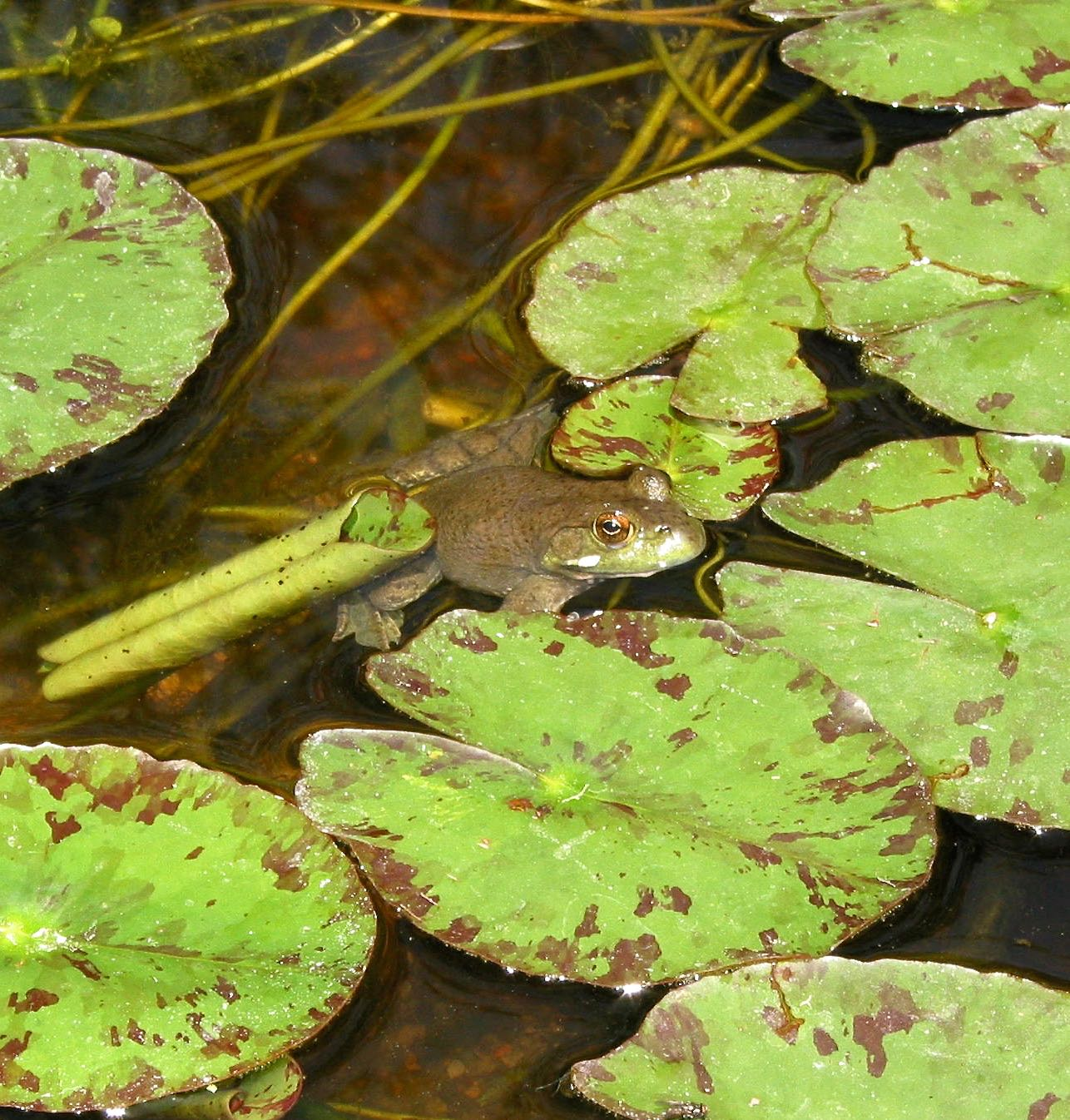 about frogs and toads