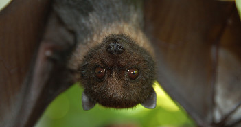Ta author at welcome wildlife page 2 of 3 all about bats sciox Images