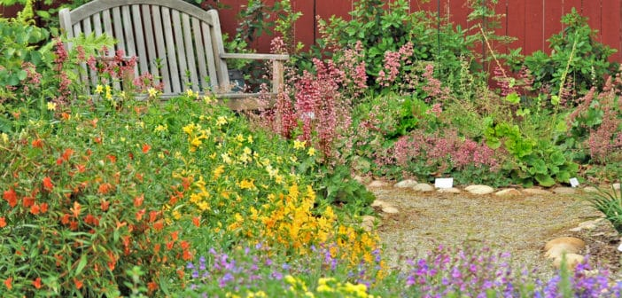 Pretty and colorful native plant garden with gray, wooden bench.