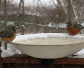 Wildlife thirsts for liquid water in winter