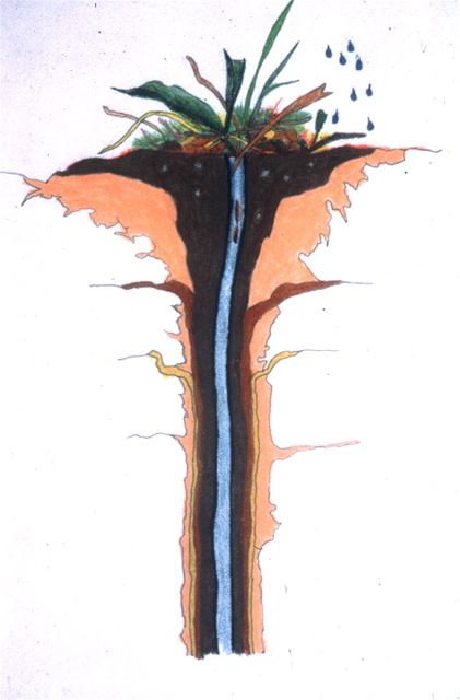 Color illustration of an earthworm burrow.