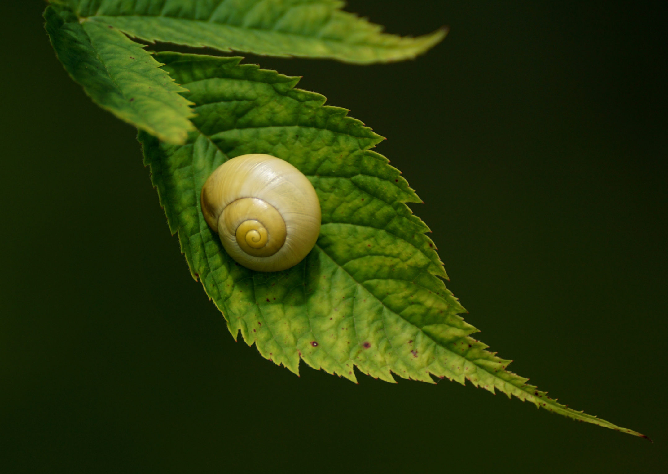 All about land snails | Welcome Wildlife