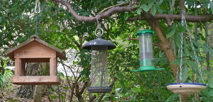 Different kinds of bird feeders hanging side by side