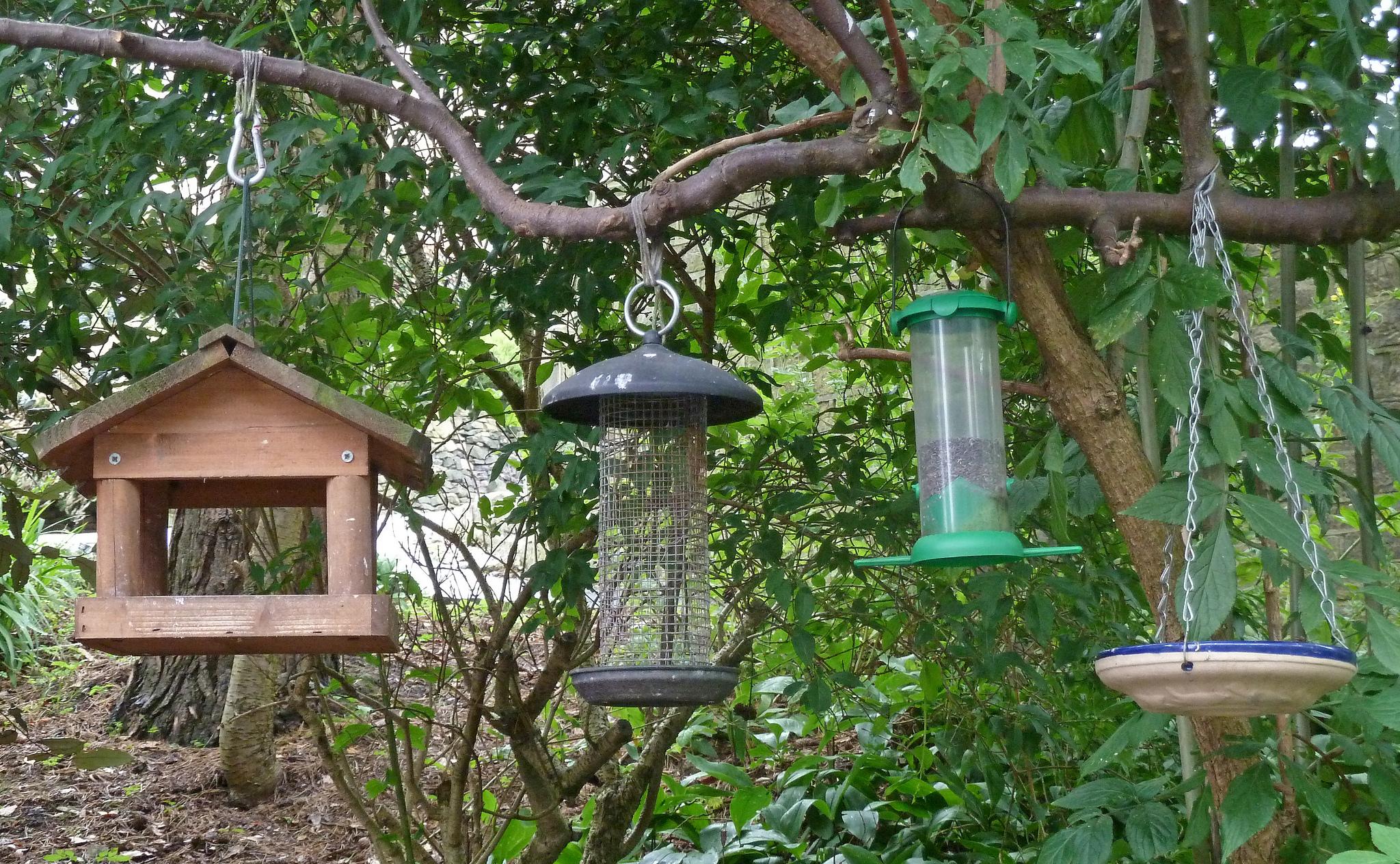 Types of bird feeders welcome wildlife for Birdhouse types