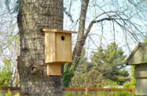 Newly built birdhouse mounted on a tree trunk.