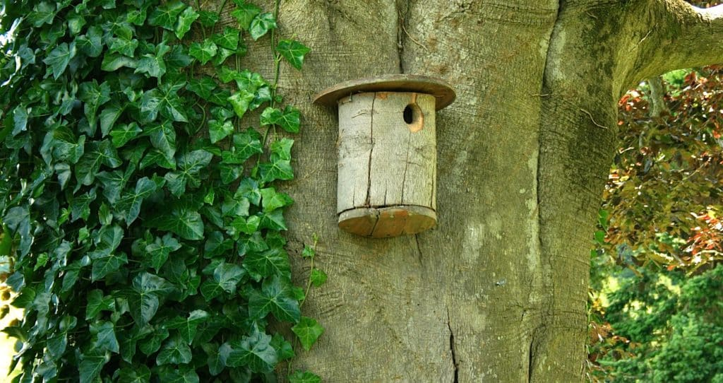 Birds Are Choosy Here S Where To Place Their Birdhouses