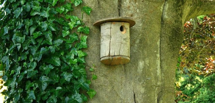 Brown, wood birdhouse mounted on a huge tree trunk.