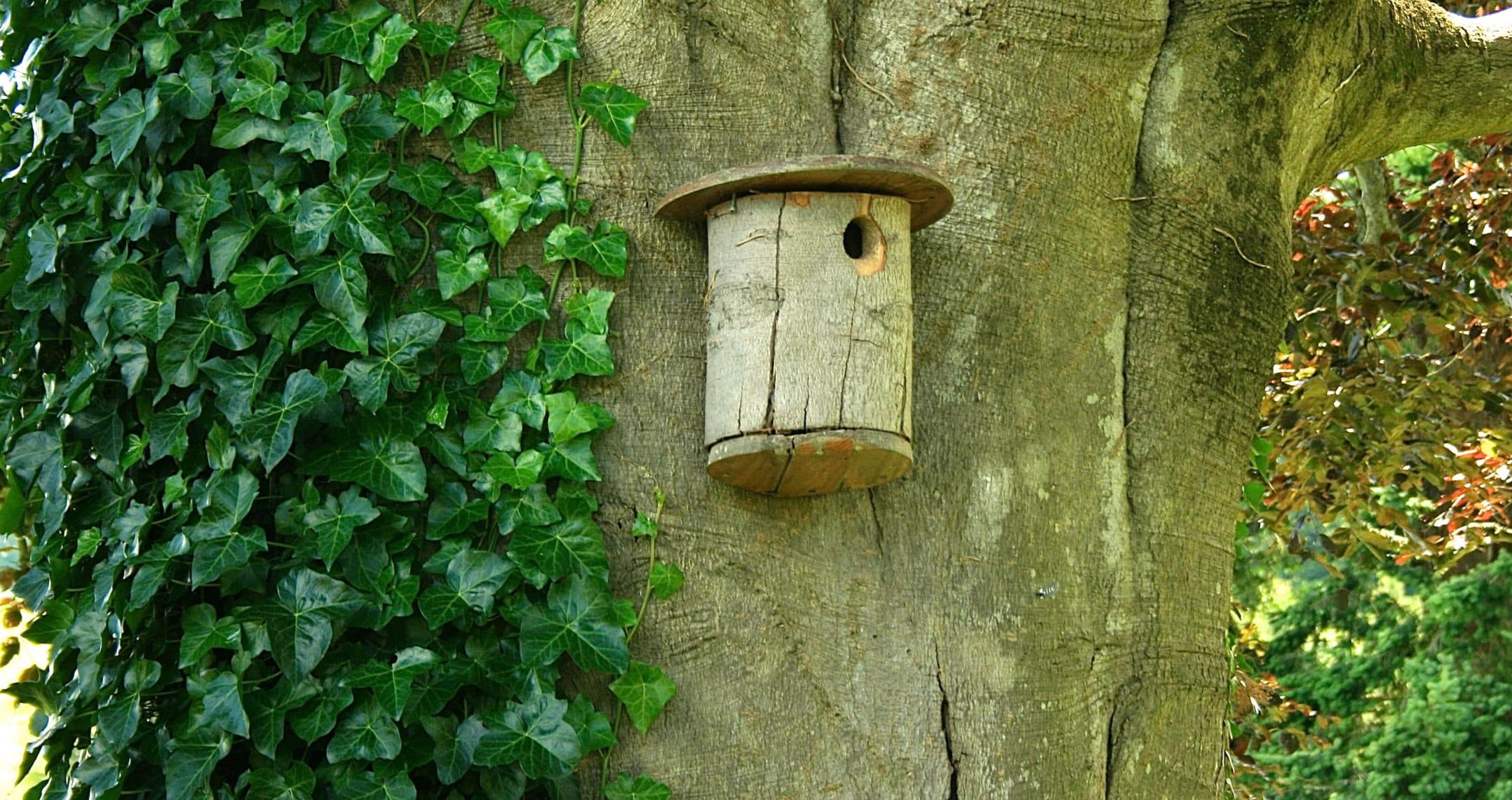 Brown Wood Birdhouse Mounted On A Huge Tree Trunk