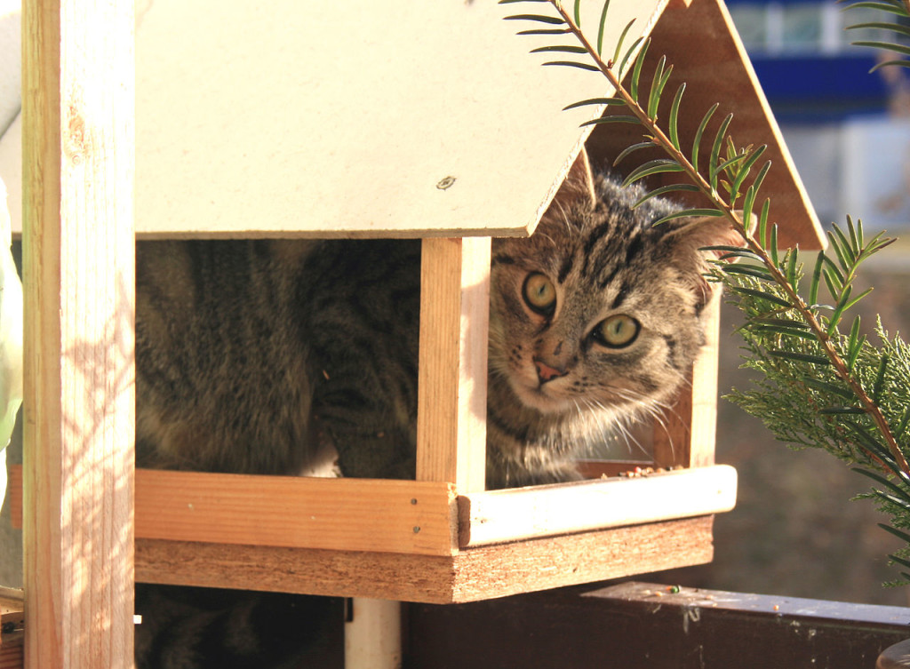 House cat sitting in a wood bird feeder