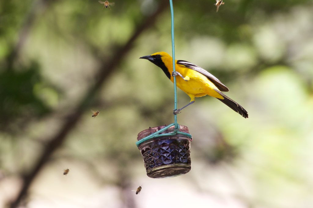 Oriole feeder holding grape jelly.