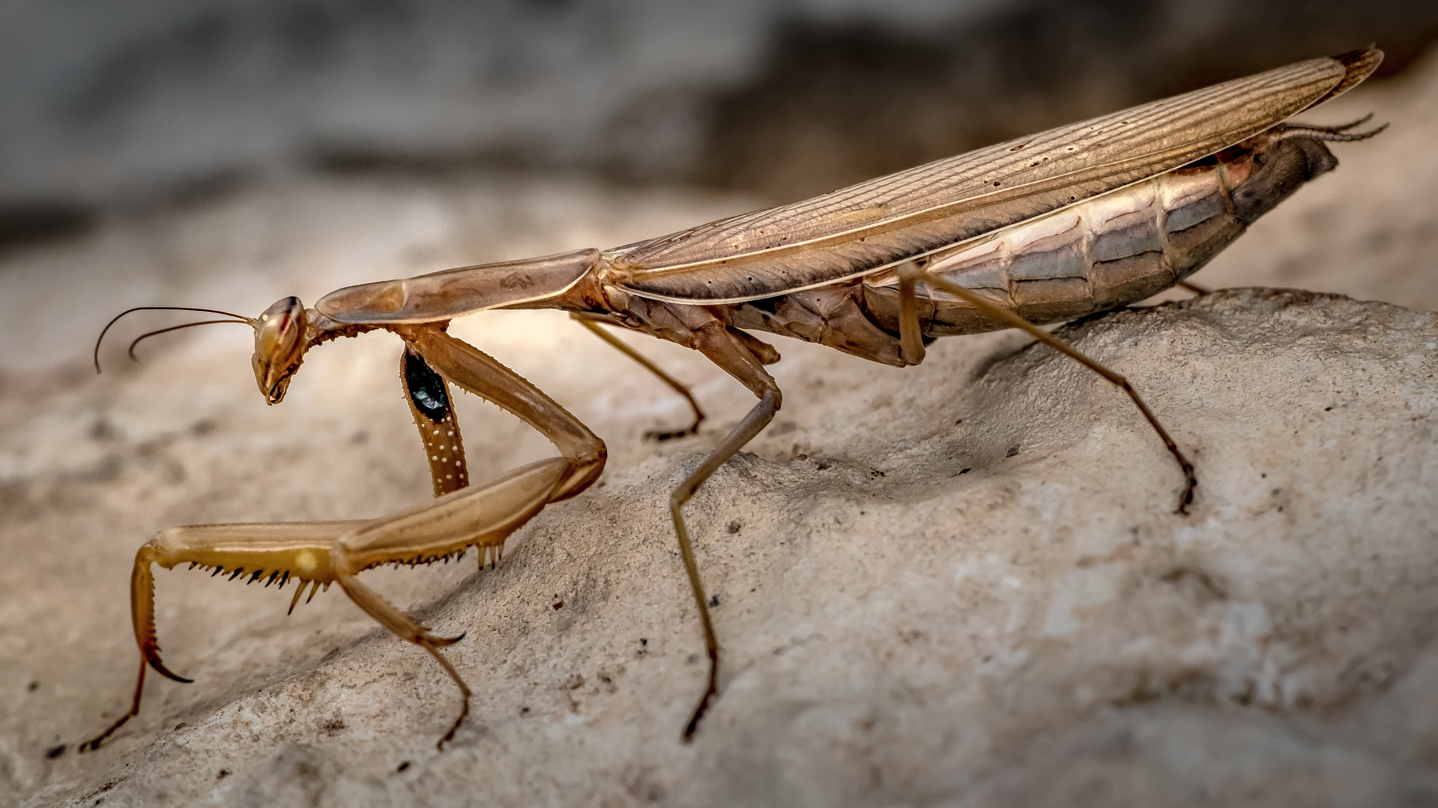 General anatomy of insects | Welcome Wildlife