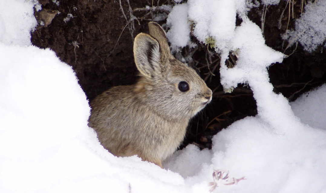 Fast facts: rabbits and hares of North America | Welcome