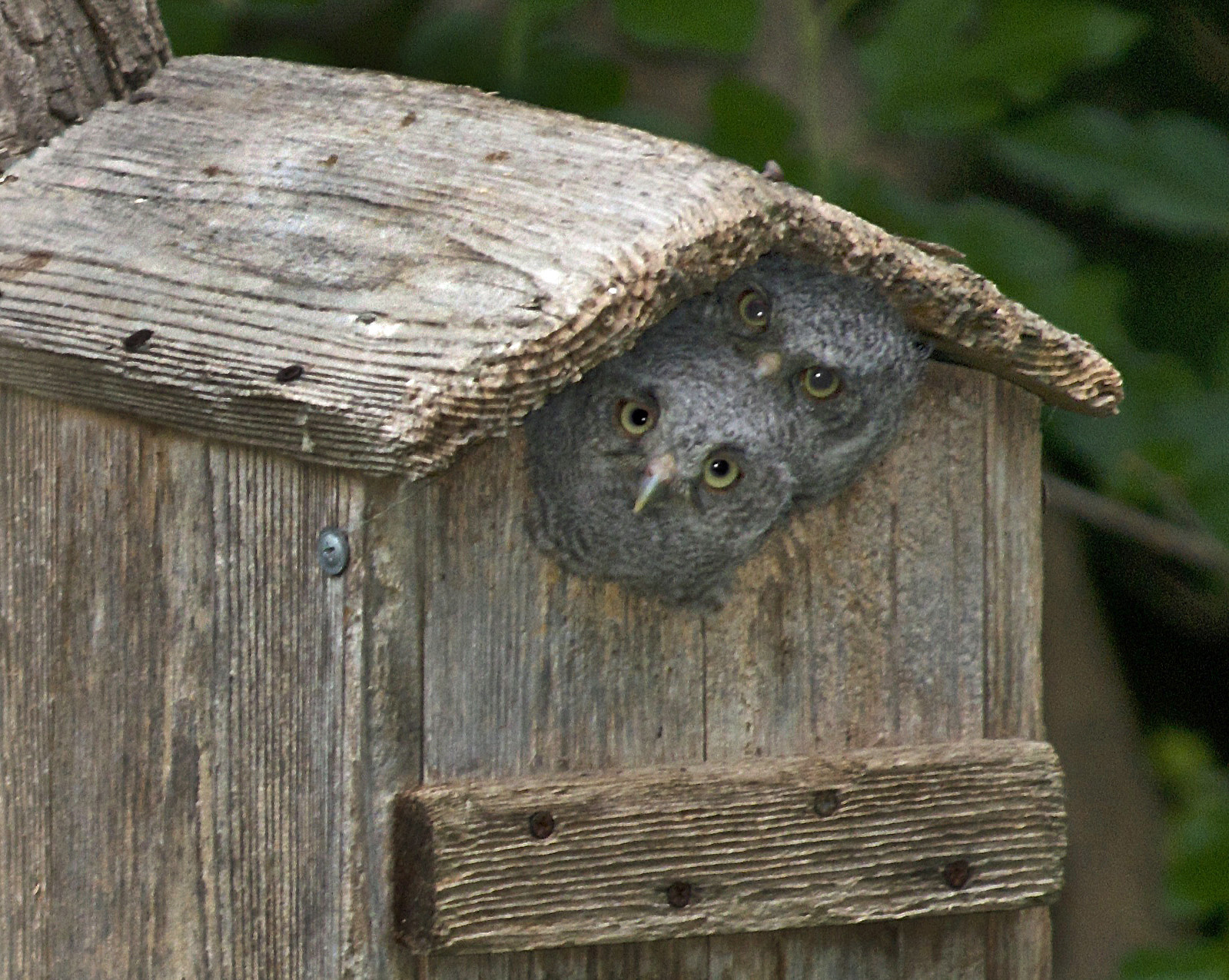 Birdhouse dimensions for different birds welcome wildlife for Different types of birdhouses