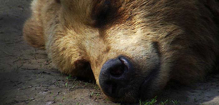 Sleeping winter away – secrets of hibernating wildlife