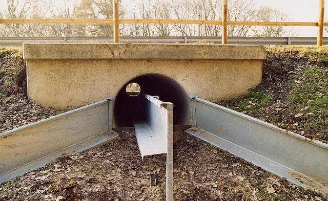 Image of a toad tunnel going under a bridge.