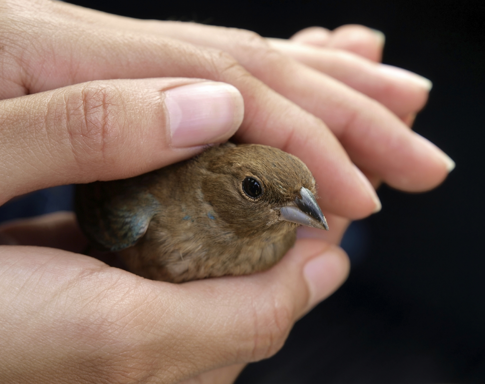A bird in hand is worth two in the bush part 3 8