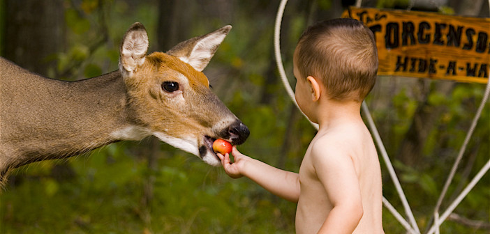 Image of a toddler feeding an apple to a deer.