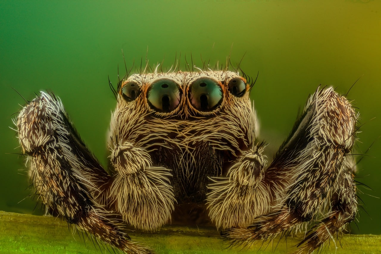 All About Spiders Basics Body Behavior Welcome Wildlife