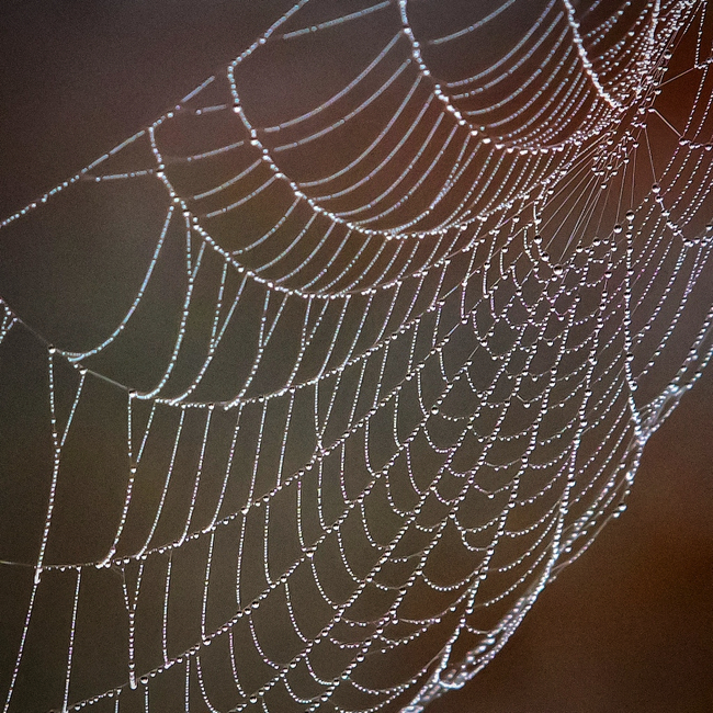 Image of a spiderweb covered with dew