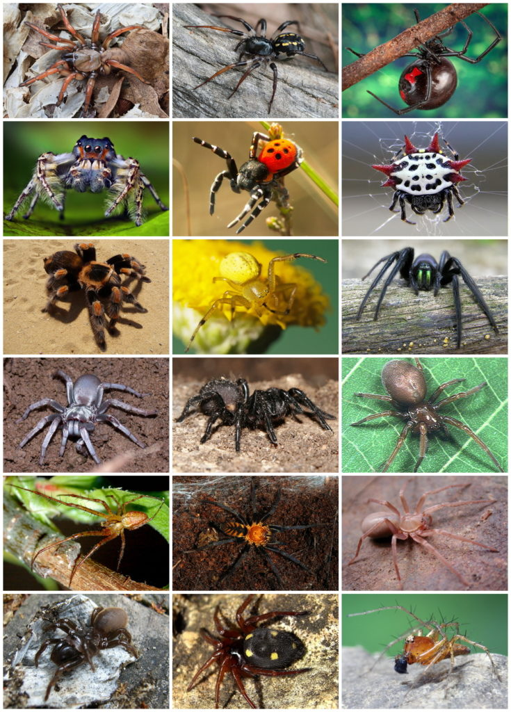 Composite image of nine different spiders, showing their diversity in appearance and colors.
