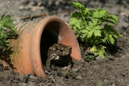 Bueno para el jardín - Bueno para el jardín | Como funcionan las cosas