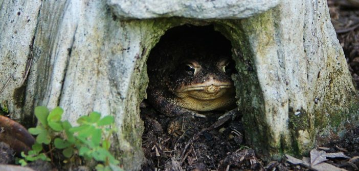 Toad sitting at the entrance to a toad house
