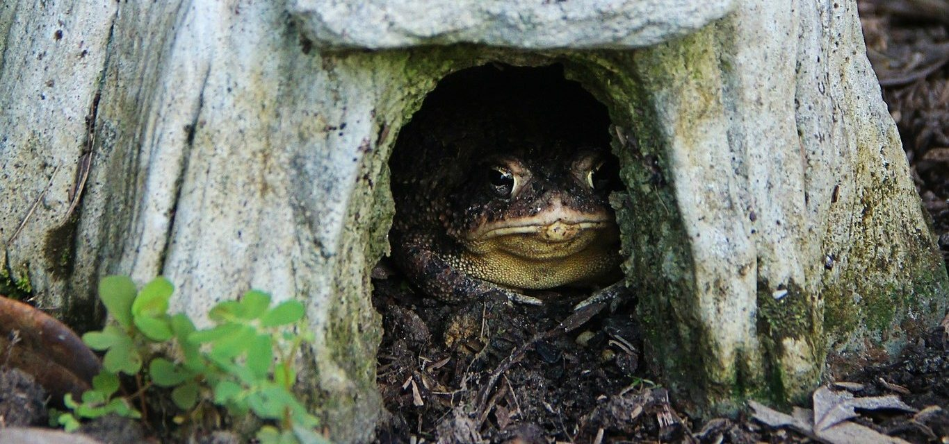 Make a toad house | Welcome Wildlife