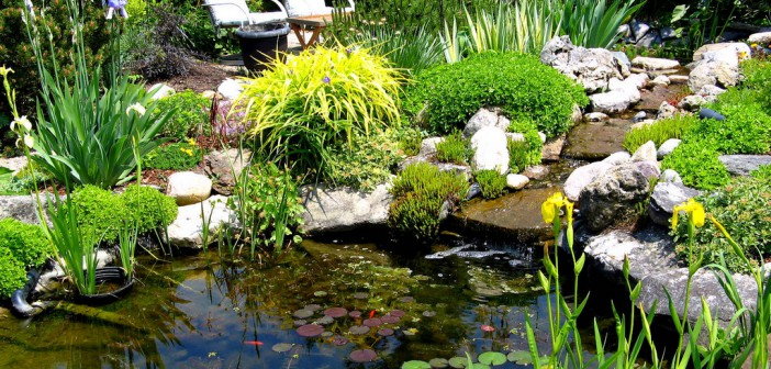 Native plants for a pond welcome wildlife for Native pond plants