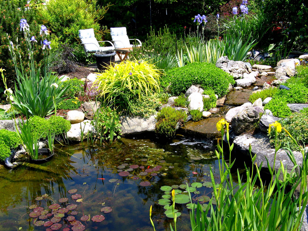 Native plants for a pond welcome wildlife for Fish pond decorations