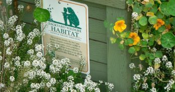 Why create a backyard wildlife habitat?