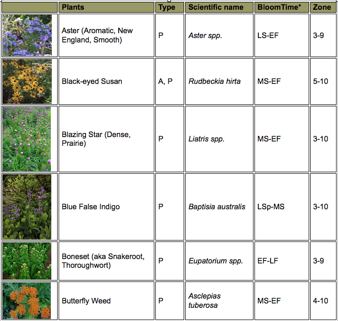 Butterfly plant chart