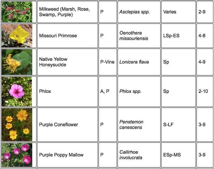 Butterfly plant chart 4