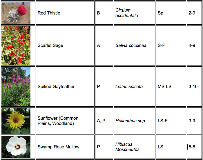 Butterfly plant chart 5