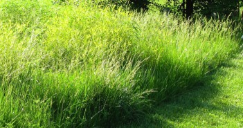 Mass of grasses