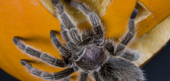 Halloween's scariest wildlife