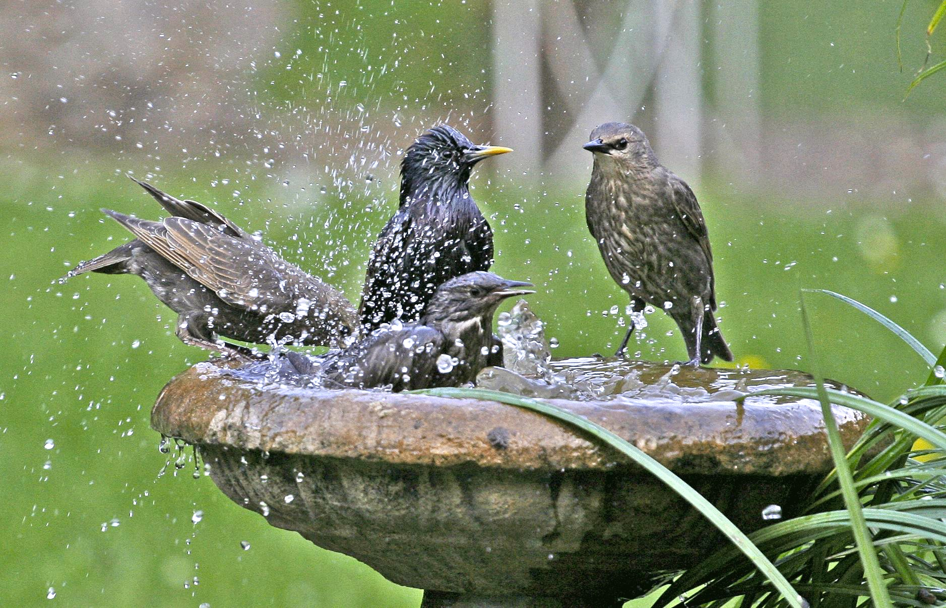 Make Water Move To Delight Birds