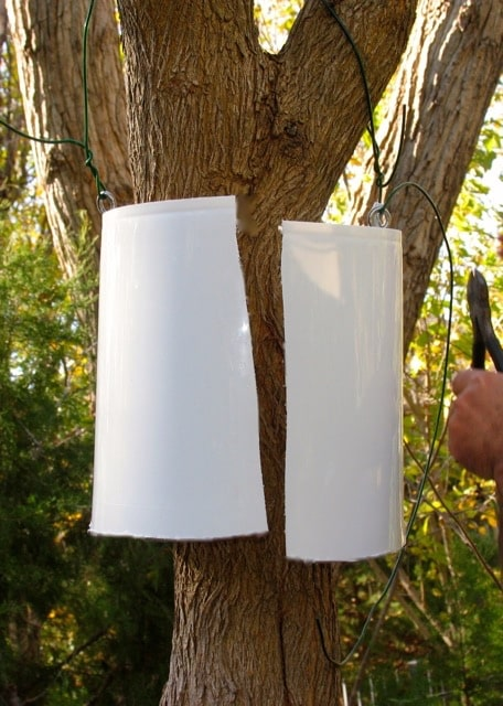 Tree Baffles To Baffle Squirrels Welcome Wildlife