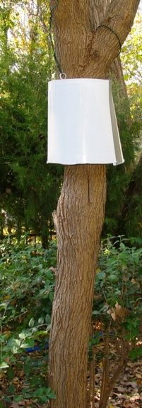 White bucket suspended around a tree trunk.