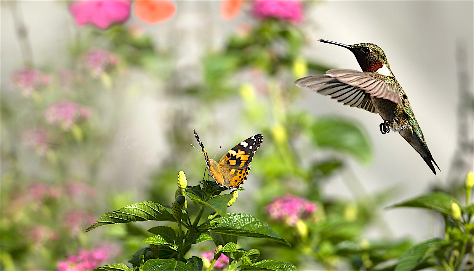 Butterfly And Hummingbird Lg