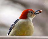 Birds and their favorite birdseeds