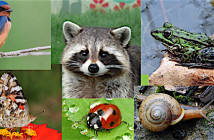 Composite image of raccoon, beetle, snail, frog, butterfly, bird, earthworm