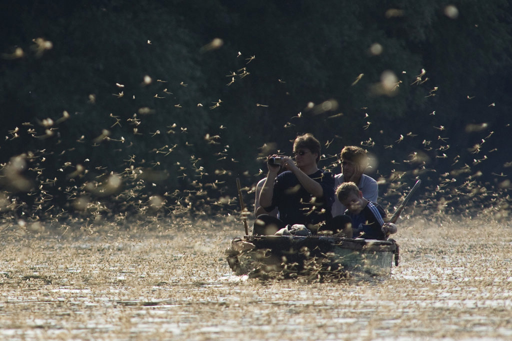 Huge swarm of mayflies surrounding a canoe with people in it. A man in the canoe is taking photos of the swarm.