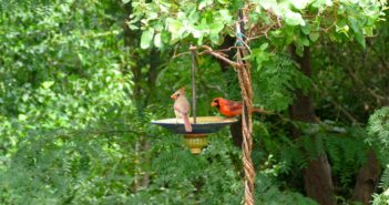 cardinal-pair-on-feeder